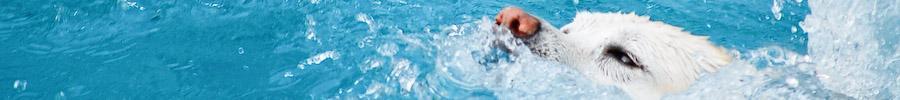 Sheba Swim